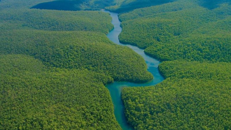 तीव्र गतिमा मासिदैछ एमेजन जंगल